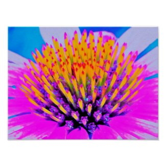 Abstract Macro Hot Pink and Yellow Coneflower Poster