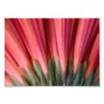 Abstract Macro Red and Pink Gerbera Flower Photographic Print