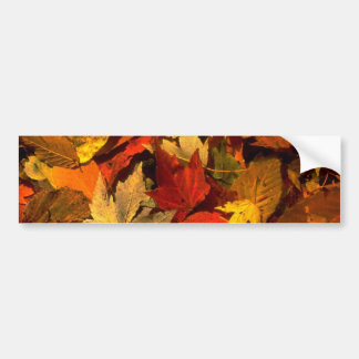 Abstract Maple and beech leaves Bumper Sticker