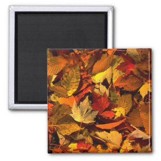 Abstract Maple and beech leaves Refrigerator Magnets