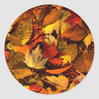 Abstract Maple and beech leaves Stickers