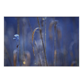 Abstract Marsh at dawn covered with hoar-frost Poster