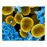 abstract microbiology art custom poster canvas