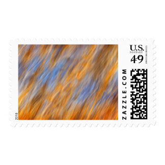 Abstract of autumn leaves and sky postage