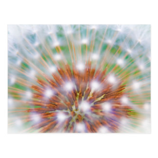 Abstract of dandelion seed head postcard