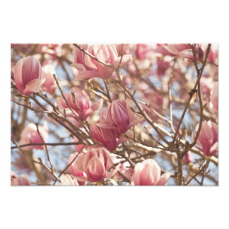 Abstract Photograph of a Pink Tulip Tree