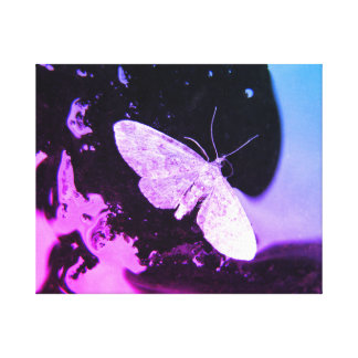 Abstract picture print moth black and pink blue