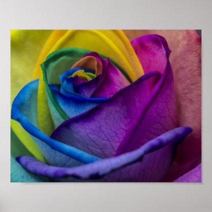 Abstract Rainbow Rose Print