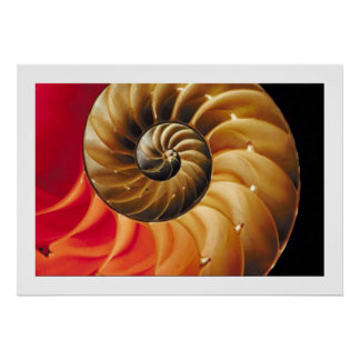 Abstract Shell Design Poster/print  33x48