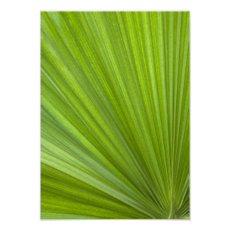 Abstract Tropical Green Palm Frond Poster