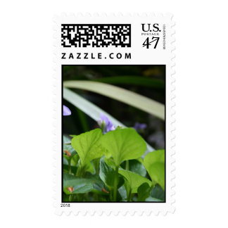 Abstract Violet Postage Stamp