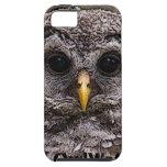 Abucheo - Owlet 2014 de Owlwatch iPhone 5 Case-Mate Fundas