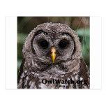 Abucheo - Owlet 2014 de Owlwatch Tarjeta Postal
