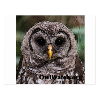 Abucheo - Owlet 2014 de Owlwatch Postales