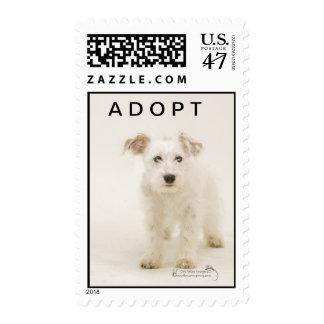 Abucheo, sello blanco del perro del terrier