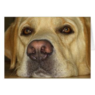 Aburrimiento - Labrador amarillo lindo Tarjeta De Felicitación