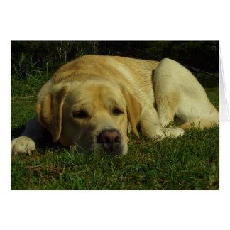 Aburrimiento - Labrador en hierba verde Tarjeta De Felicitación