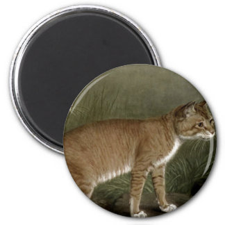 Abyssinian and Indian Cat Refrigerator Magnets