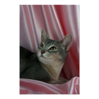 Abyssinian, blue poster