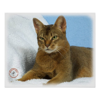 Abyssinian Cat 9Y009D-020 Posters