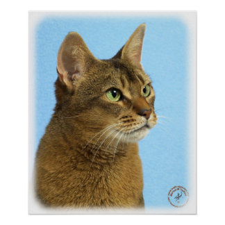 Abyssinian Cat 9Y009D-032 Poster