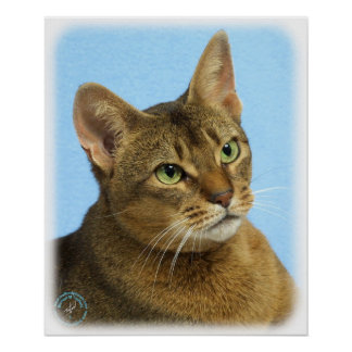 Abyssinian Cat 9Y009D-036 Posters