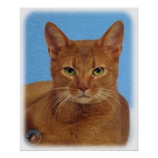 Abyssinian Cat 9Y009D-046 Poster