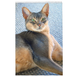 Abyssinian Cat Calendar 2015 (customize any year)