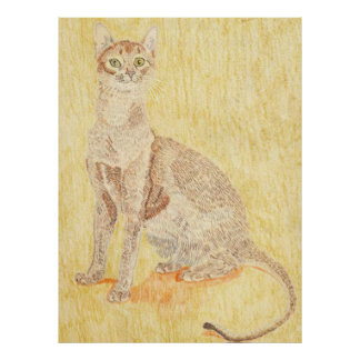Abyssinian Cat Poster