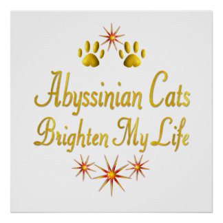 Abyssinian Cats Brighten My Life Posters