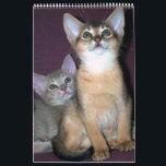 """Abyssinian Cats Calendar<br><div class=""""desc"""">A calendar with Abyssinian cats and kitten photographs. Customize the calendar as you like during the ordering process.</div>"""