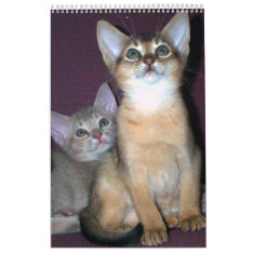 Abyssinian Cats Calendar at Zazzle
