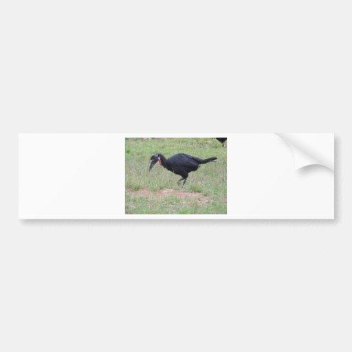 Abyssinian Ground Hornbill Bumper Stickers