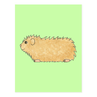 Abyssinian Guinea Pig. On Mint Green. Postcard