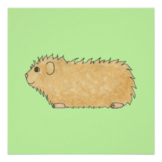 Abyssinian Guinea Pig On Mint Green Posters