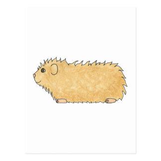 Abyssinian Guinea Pig. Postcard