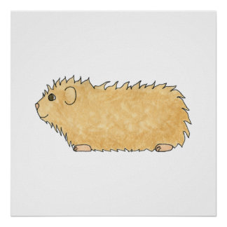 Abyssinian Guinea Pig. Poster
