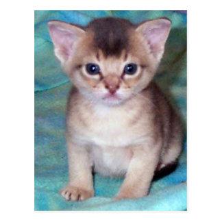 Abyssinian Kitten Postcard