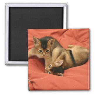 Abyssinian kittens refrigerator magnet