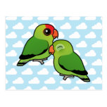 Abyssinian Lovebird Adorable Pair Postcard