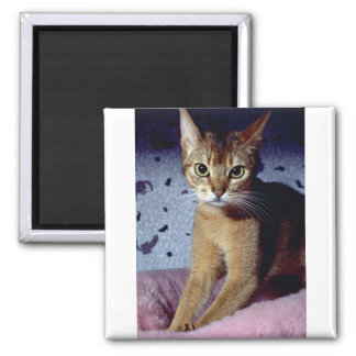 Abyssinian 2 Inch Square Magnet