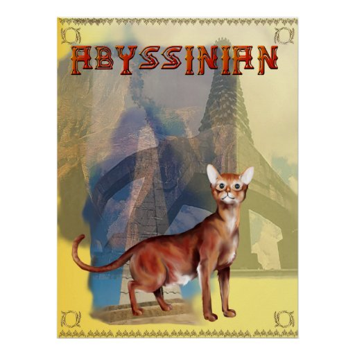 Abyssinian Poster
