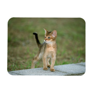 Abyssinian Rectangle Magnet