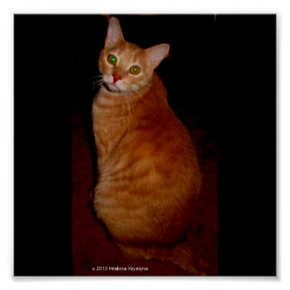 ABYSSINIAN SEATED POSTERS