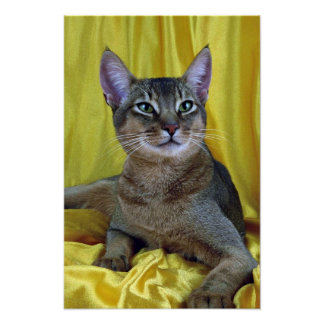 Abyssinian, usual posters