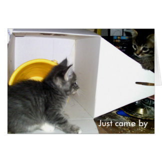 """Acaba de venir cerca decir la tarjeta del gatito"