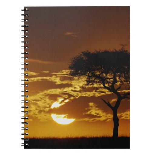 Acacia de la espina del paraguas, tortilis del aca libros de apuntes con espiral