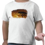 Acacia de la espina del paraguas, tortilis del aca camisetas