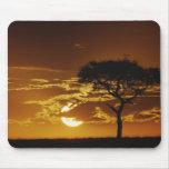 Acacia de la espina del paraguas, tortilis del aca alfombrilla de ratones