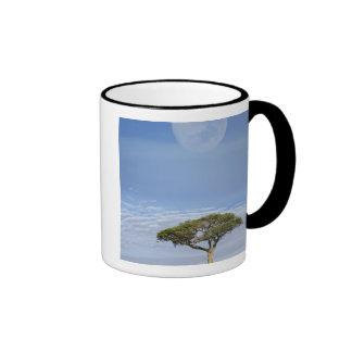 Acacia de la espina del paraguas tortilis del aca taza de café